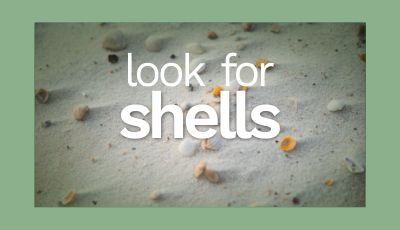 Tip 3: Where Shells Wash Up, So Too Washes Treasure
