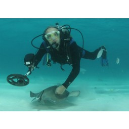 """Scuba diver petting a manta ray underwater holding a Fisher 1280X Metal Detector with 8"""" Search Coil"""